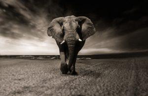 Tableau éléphant