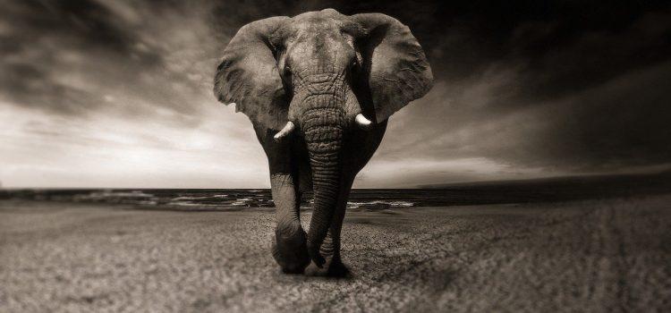 Comment trouver le meilleur emplacement pour un tableau éléphant?