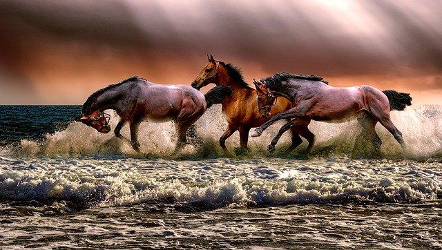 magnifique tableau avec des chevaux