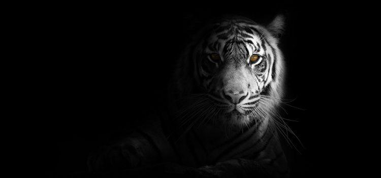 Décoration : opter pour une housse de couette tigre